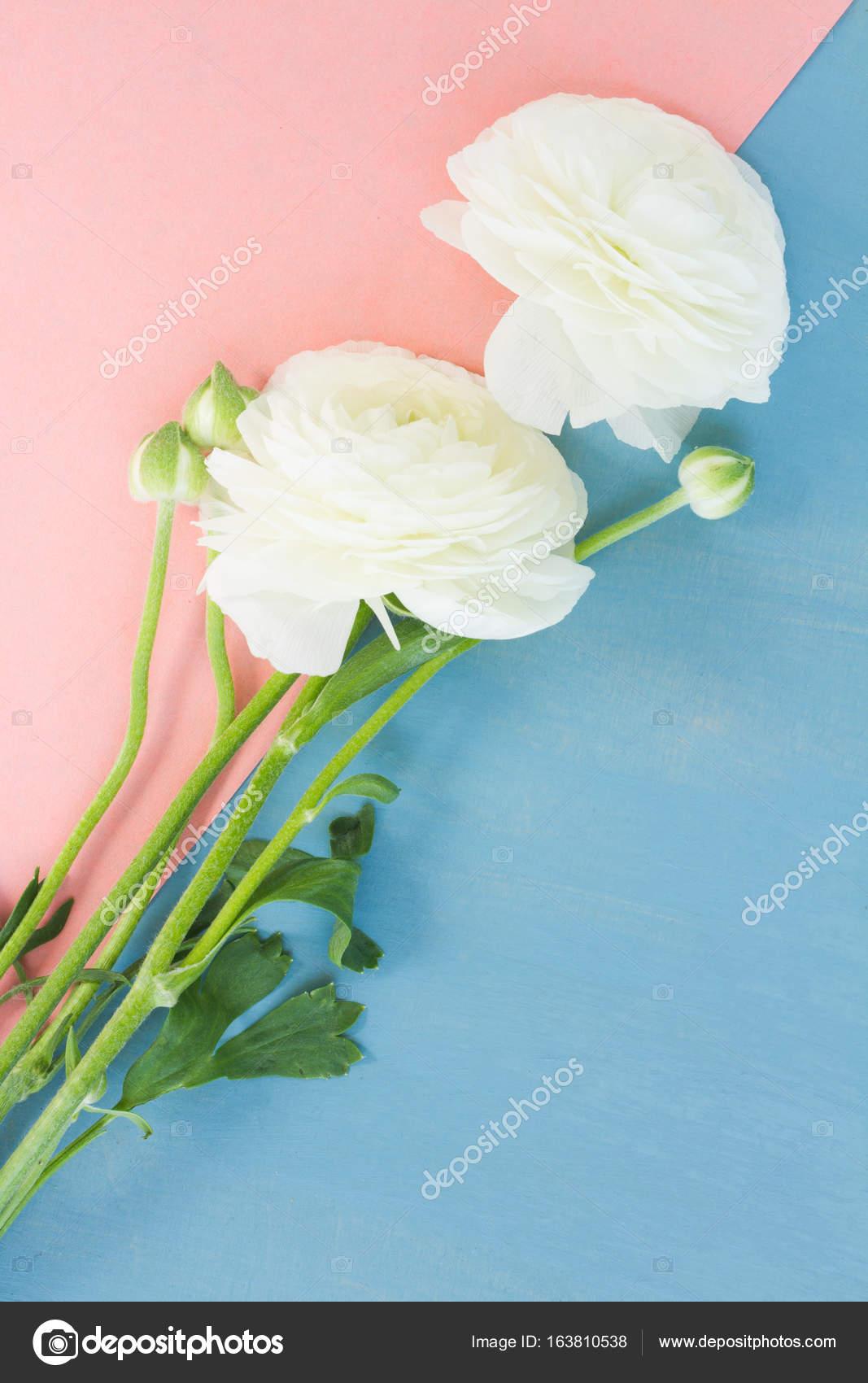 White ranunculus flowers stock photo neirfys 163810538 white ranunculus flowers stock photo mightylinksfo
