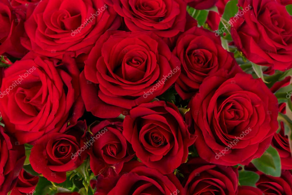 bouquet of dark red roses