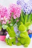Concetto di giardinaggio con fiori freschi del giacinto