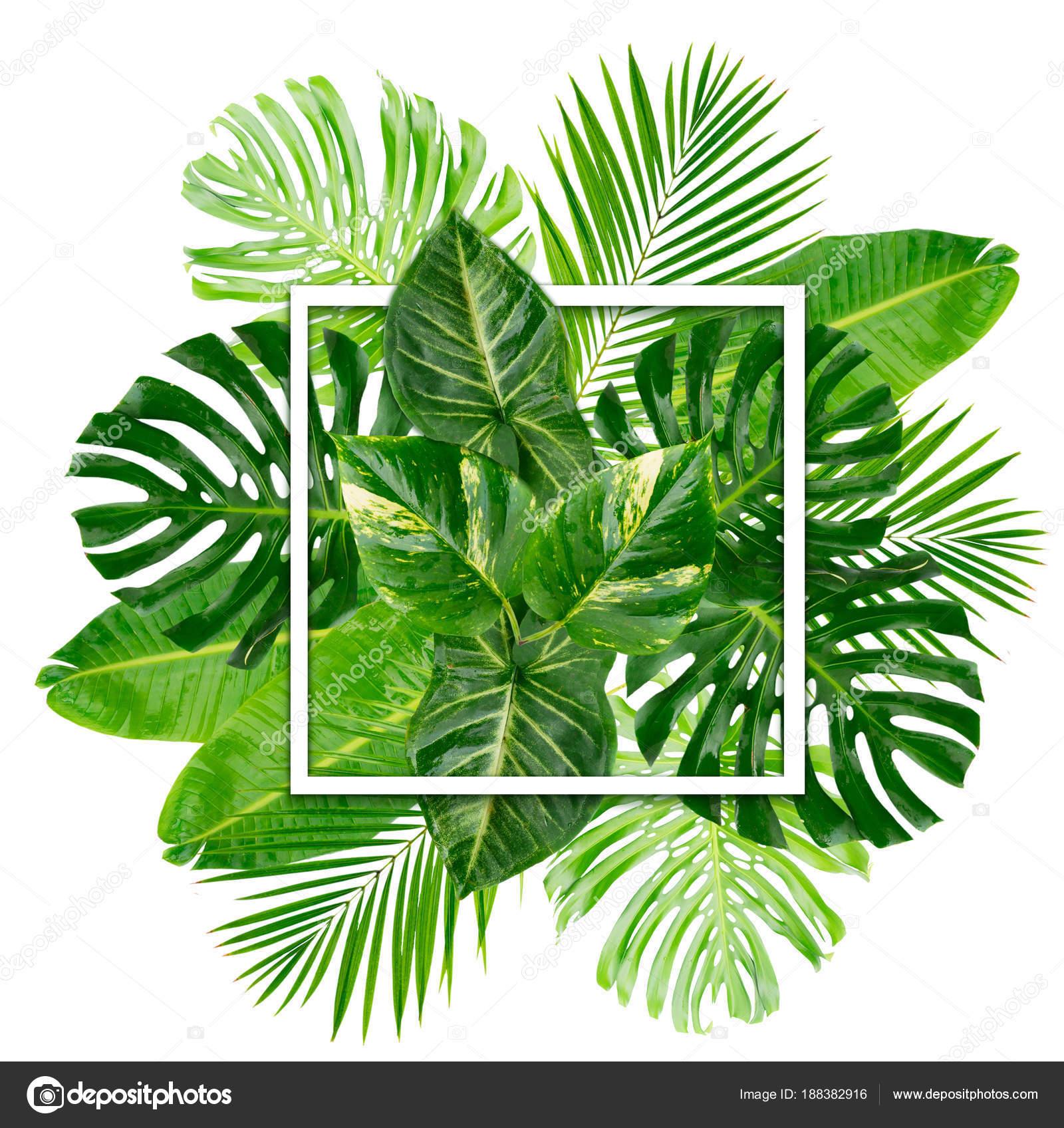 Fondos de hojas verdes en hd