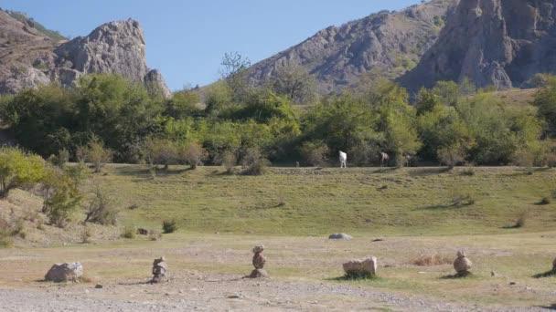 Příroda. Koně v pole, hory a modré nebe, krásné podzimní přírody