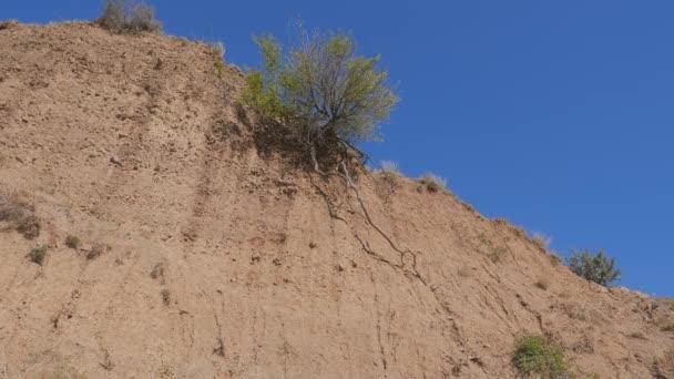 Roccia di sabbia con un albero verde solo. Crimea. Zelenogorie