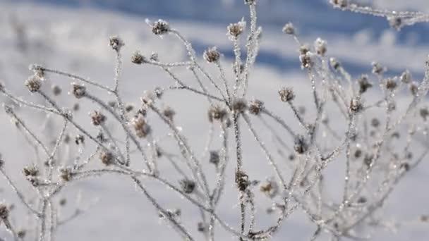 4 k mrazivé květiny v ranní rosa na louku, pole, sluneční paprsky, sunbeam prostřednictvím magické tajemství mýtině mlha, kouř, dramatické jaro, zimní krajina