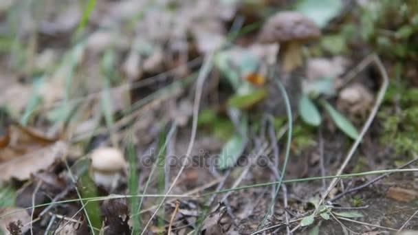 Az őszi erdő sötét