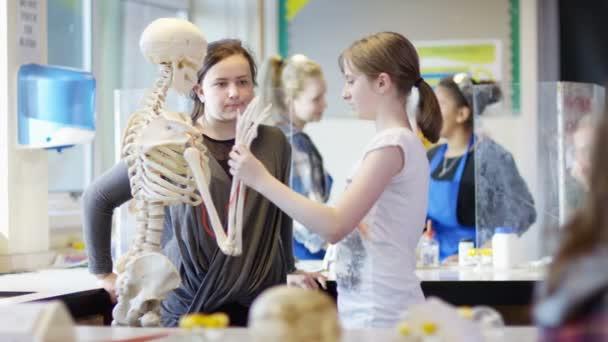 diákok látszó-on csontváz
