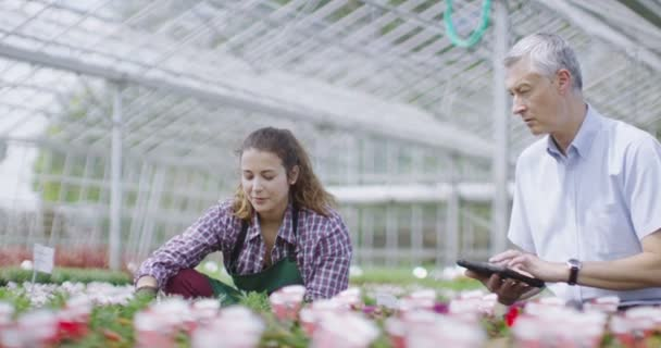 workers work in greenhouse