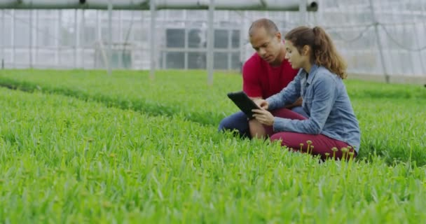 Pracovníci kontroly rostlin s tabletem