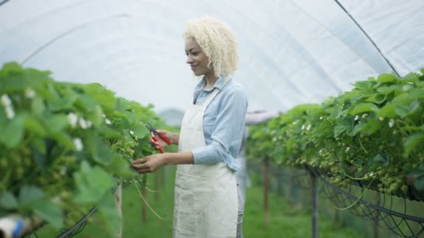 4k ať se usmívám farma pracovník prořezávání ovocných keřů v sadech