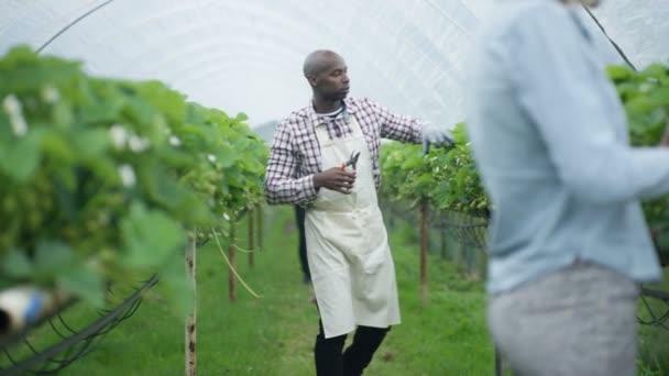 4 k africká americká zemědělský pracovník prořezávání ovocné keře v sadech