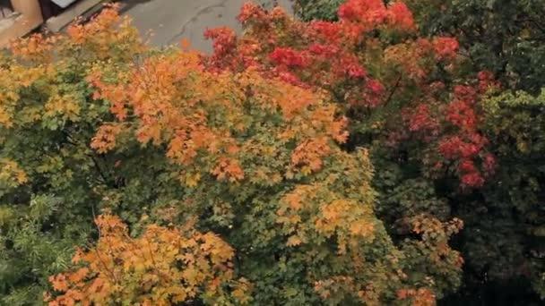 Herbstbäume, gelbe Blätter