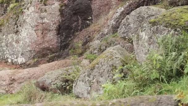 Velké kameny balvany v zeleným mechem