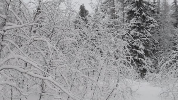 téli hófödte erdő
