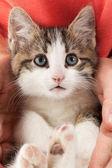 Mladé kotě spočívá v rukou
