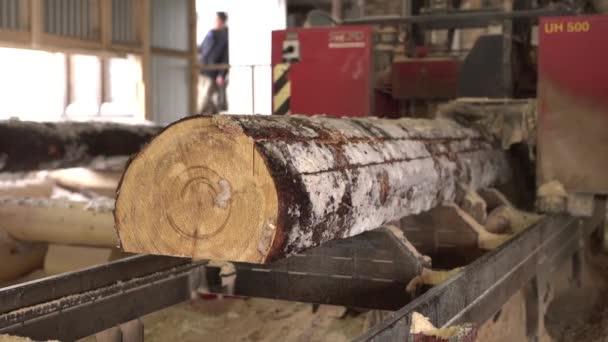 Vista di taglio del legno in segheria, close-up