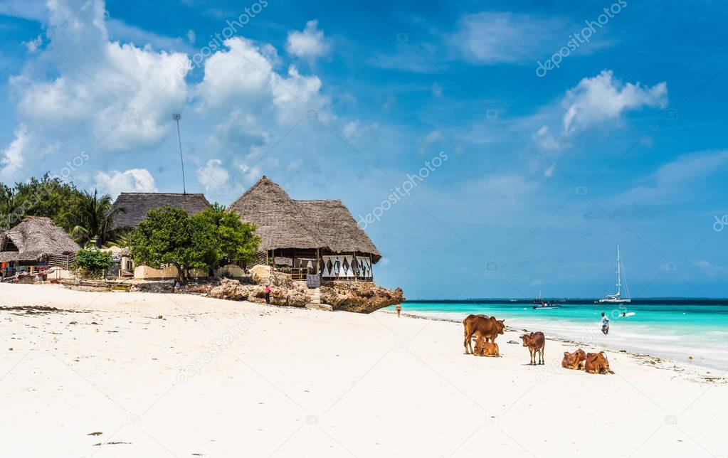 colorful seascape with african cows and huts on the beach