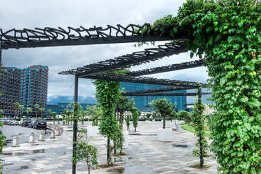 Pergola with green woody vines