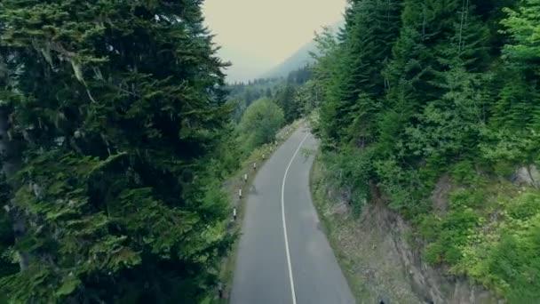 DRONY 4k procházky silnice mezi borovým lesem