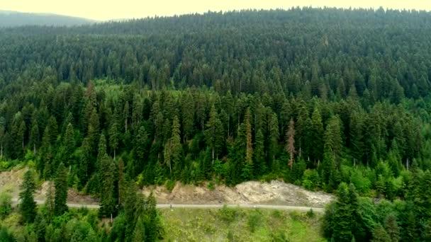 4 k letecké video ze zelených stromů lesa