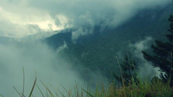 Nízko ležící mlhou obtékání svěže zeleného lesa
