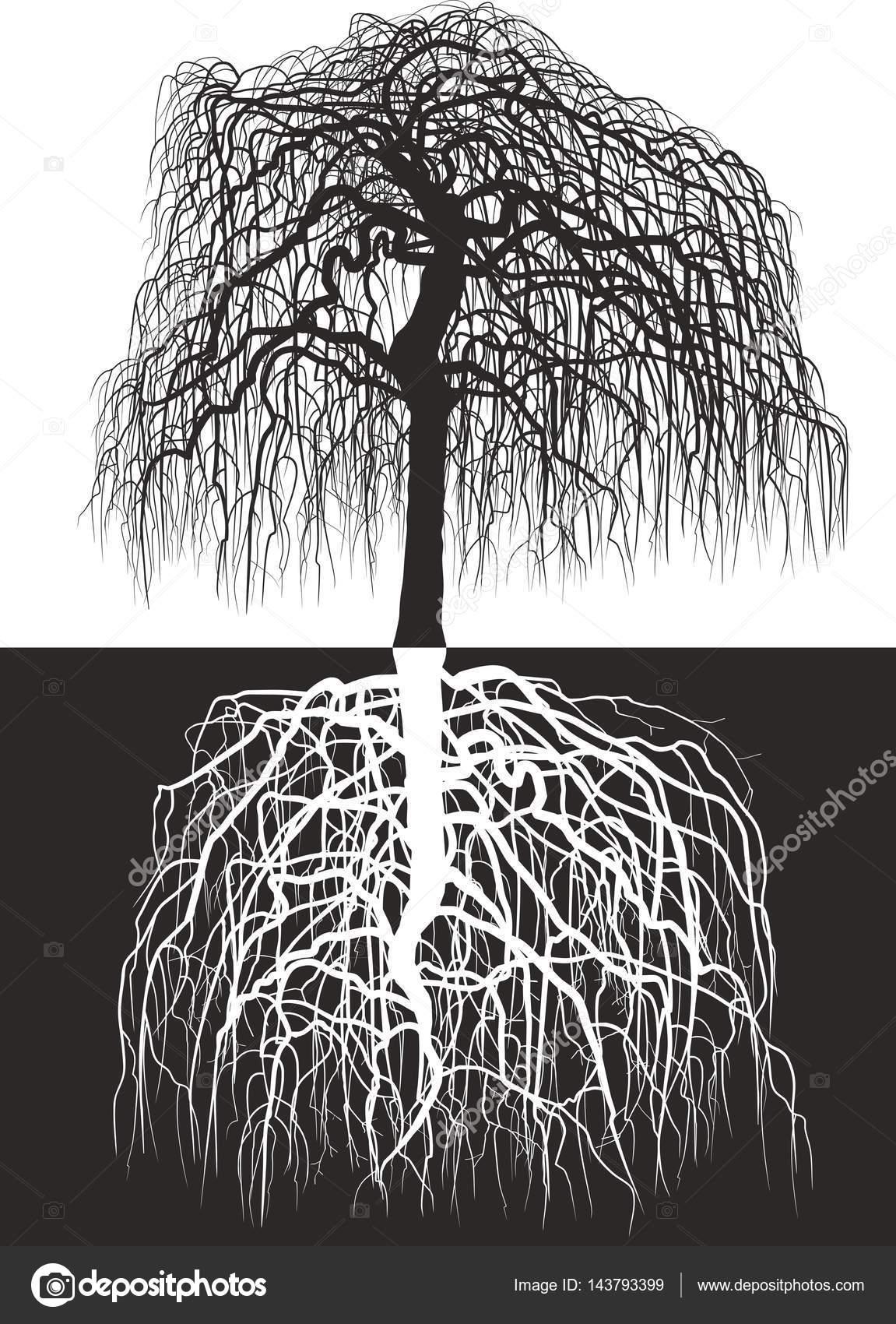 Вистерия дерево вместе с корнями — Векторное изображение ...
