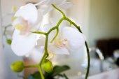 Fényképek Közelkép a fehér virágok, a zöld szőlő