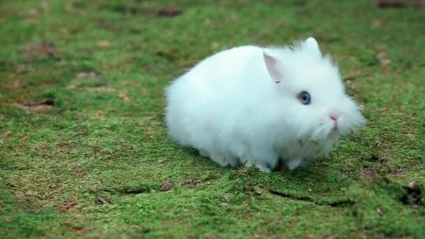 White Little Rabbit on Green Moss