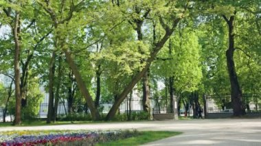 Public Park Scene