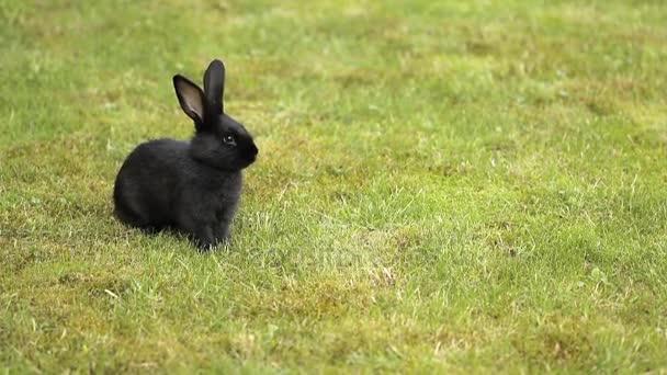 schwarzes Kaninchen auf grünem Gras