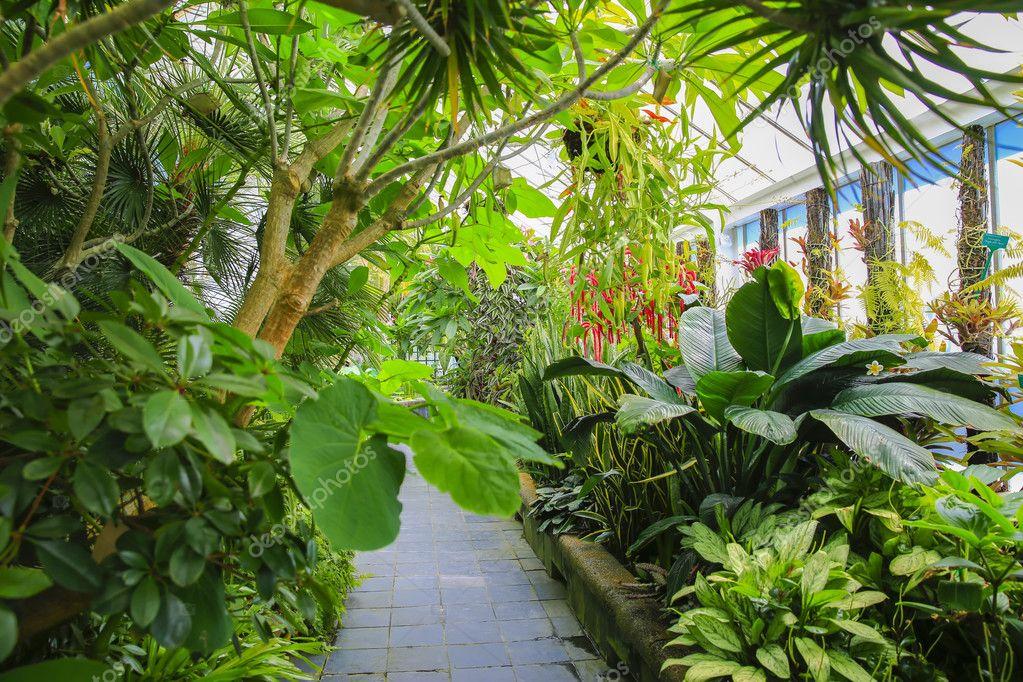 Begonia house interior, Wellington Botanical Garden, New Zealand
