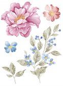 Aquarell Illustration Blume