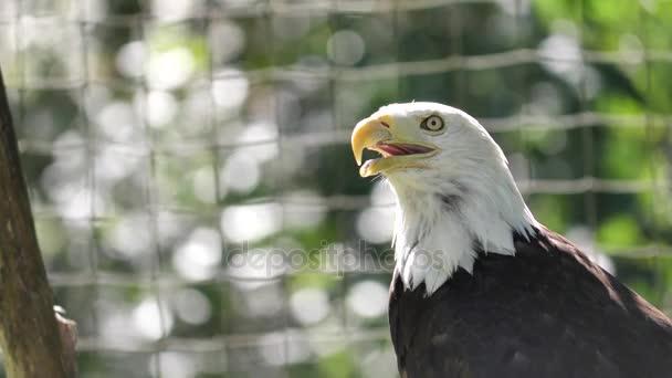 Nahaufnahme eines sich bewegenden Adlers mit verschwommenem grünen Naturhintergrund