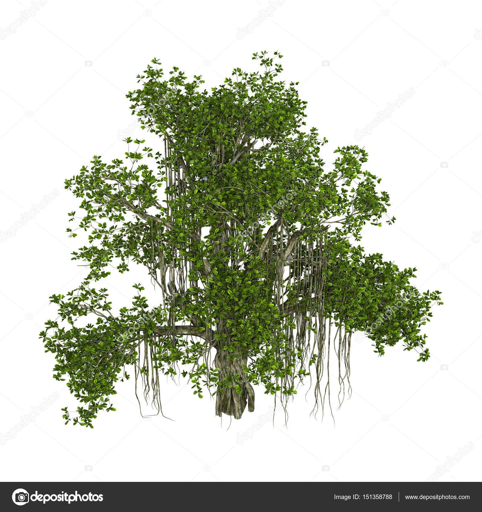 3D Rendering Banyan Tree on White — Stock Photo © PhotosVac #151358788