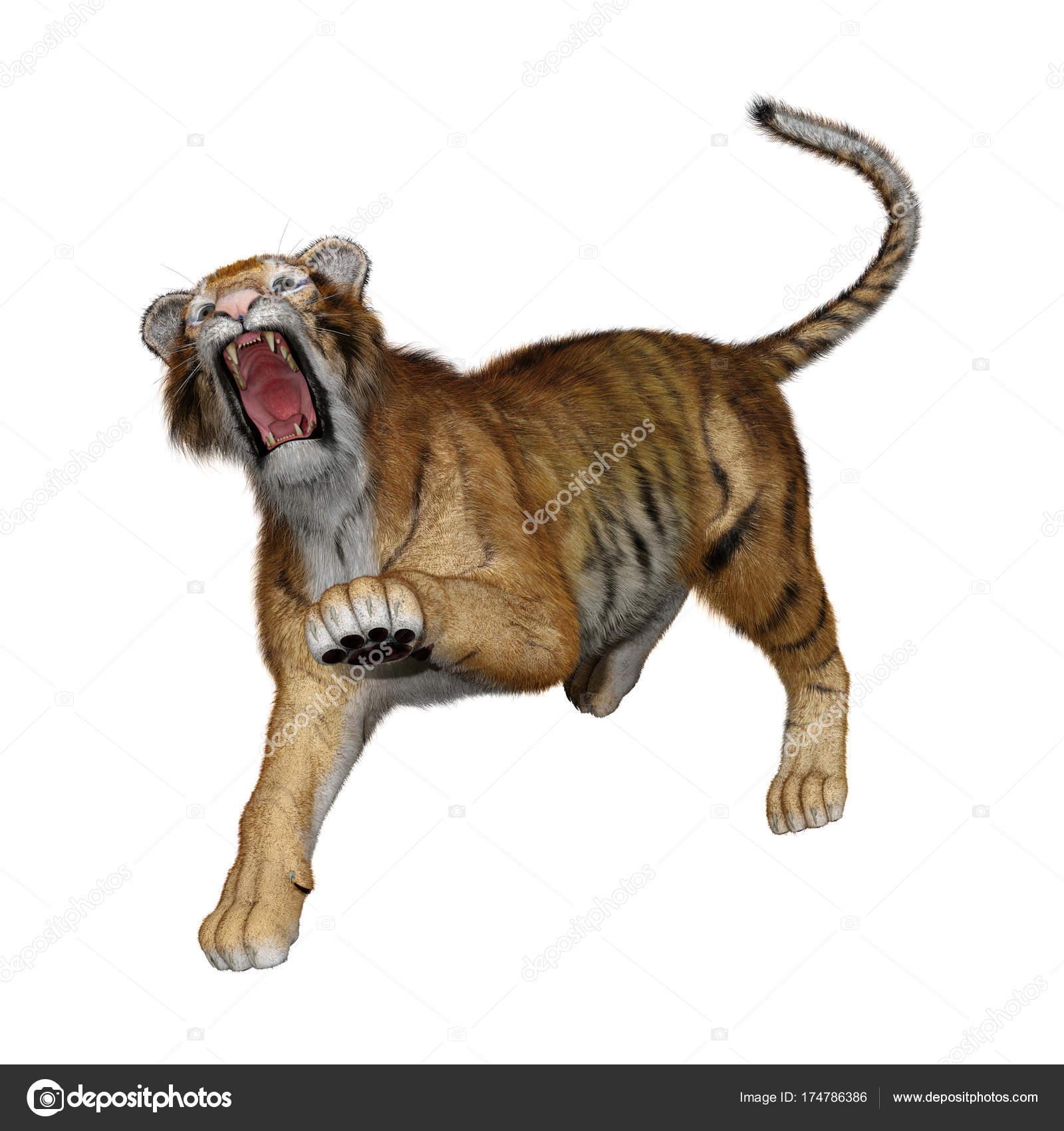 puma blanche avec tigre