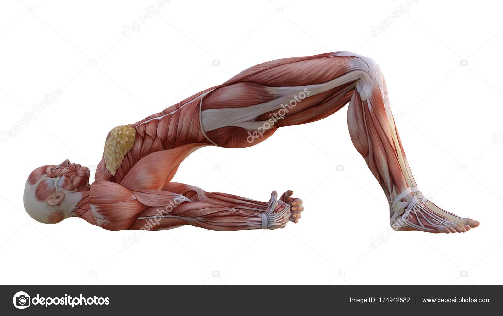 Figura de anatomía femenina renderizado 3D sobre blanco — Foto de ...