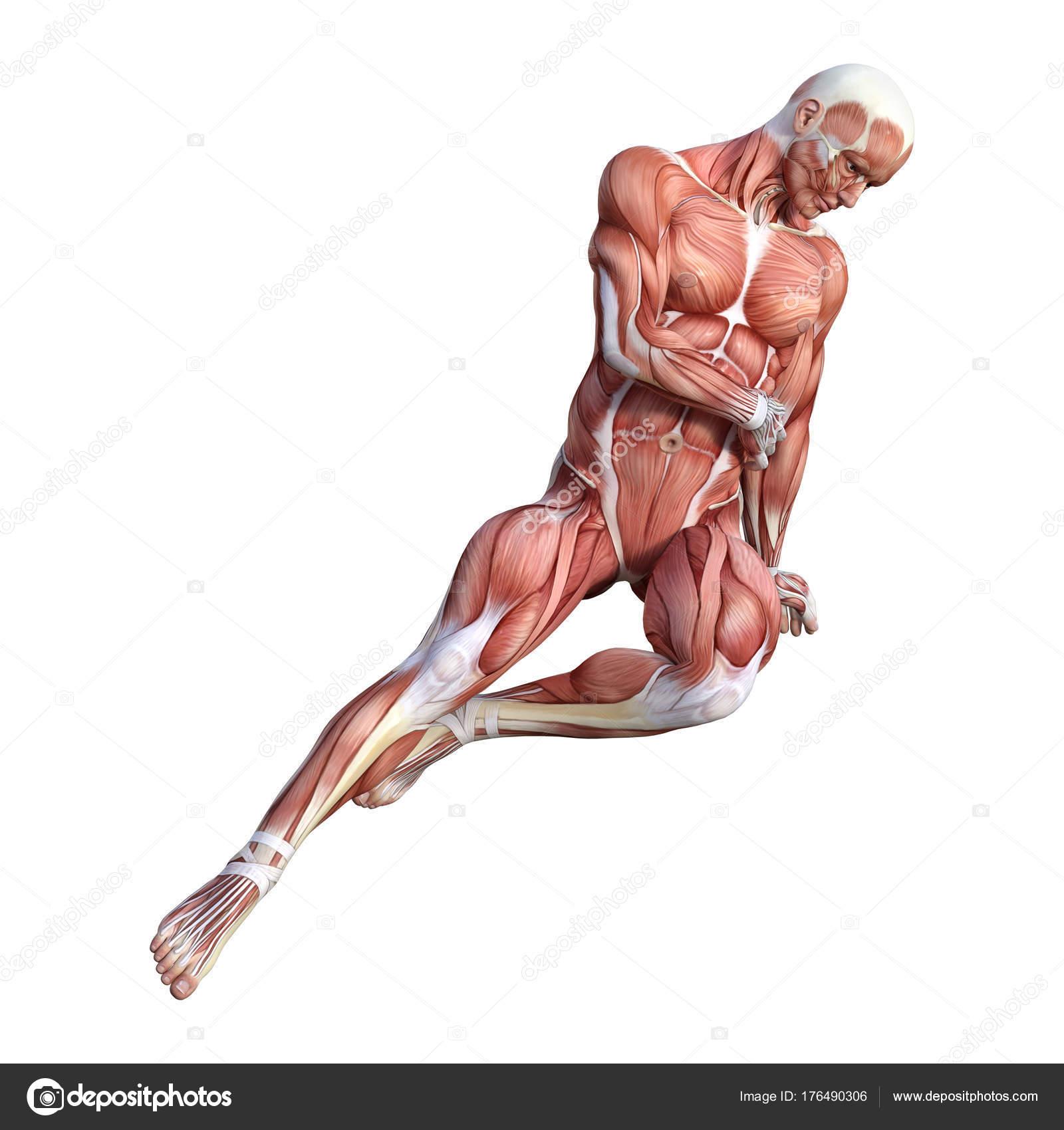 representación de anatomía masculina Figura 3D sobre blanco — Foto ...