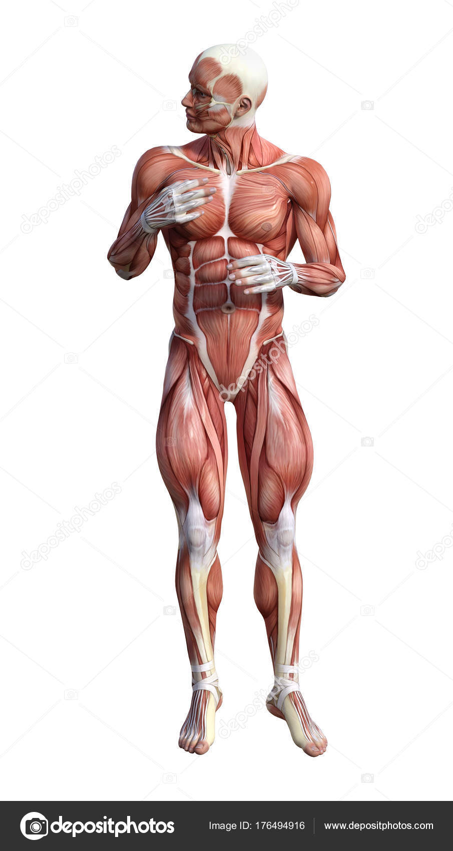 Tolle Anatomie In 3d Bilder - Anatomie Ideen - finotti.info