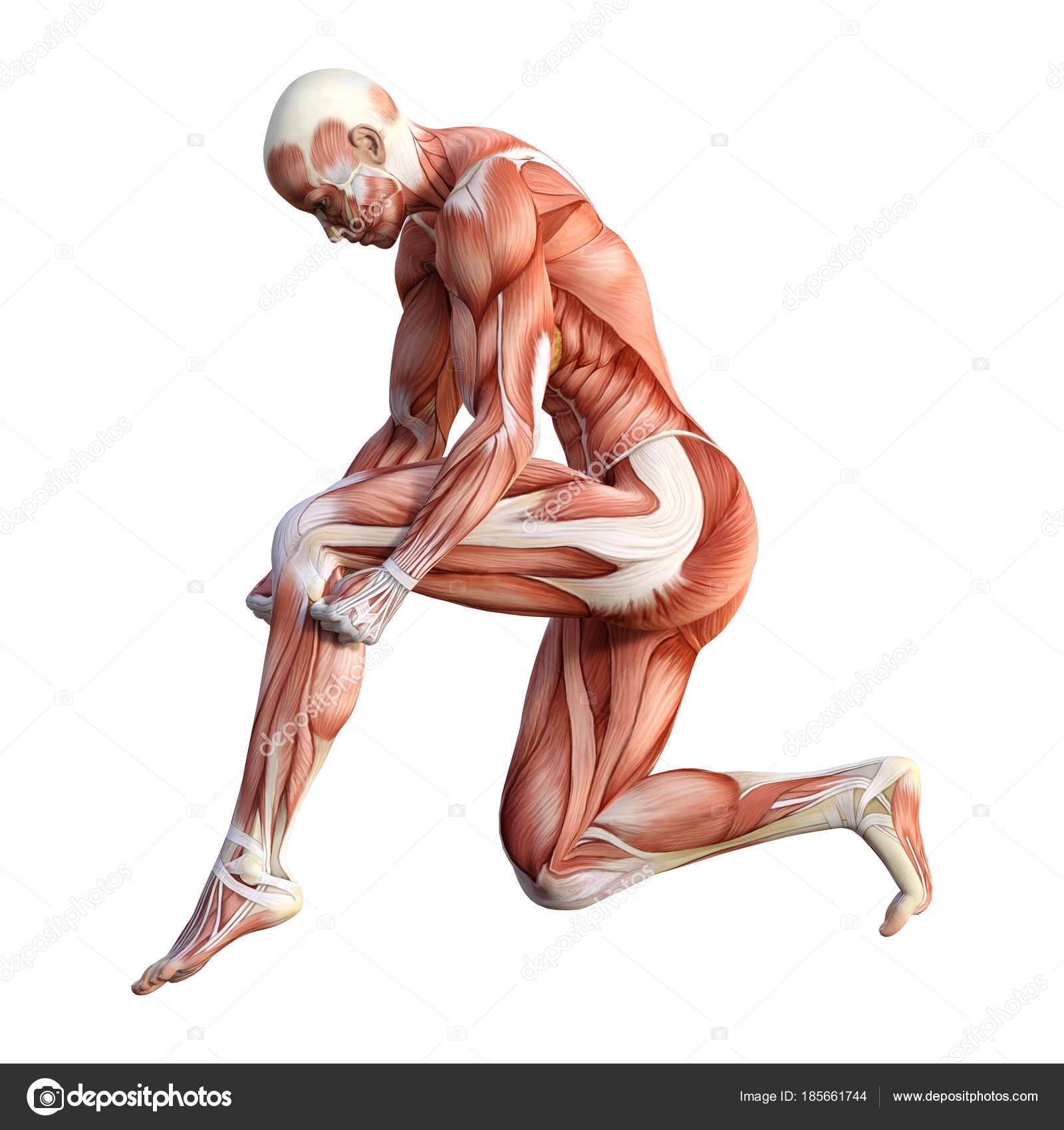 3D Rendering Female Anatomy Figure on White — Stock Photo ...