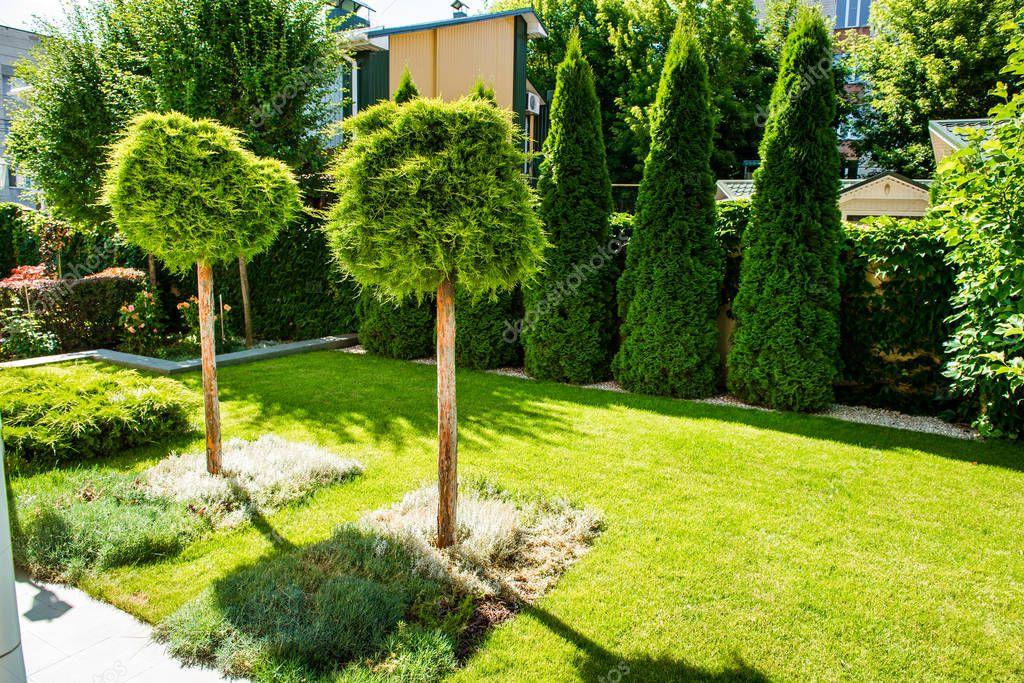 Fotos arbustos decorativos dise o del paisaje patio - Arboles decorativos ...
