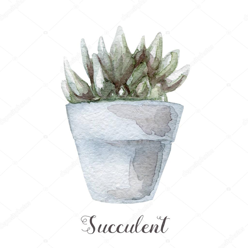 Hand painted watercolor succulent plants in pot. Perfect for cards, labels, invitations, web, scrapbook, flyer etc