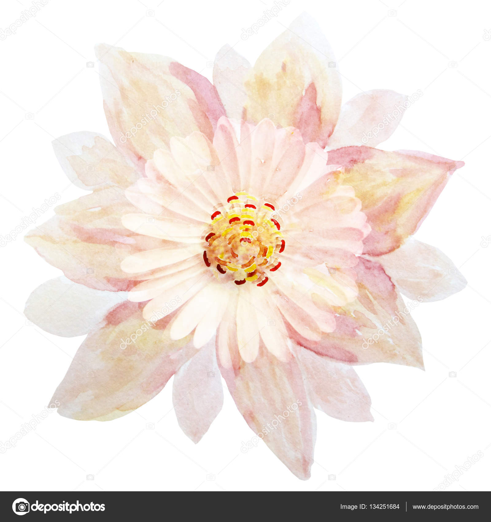 A Single Pink Flower On A White Background Handmade Watercolor