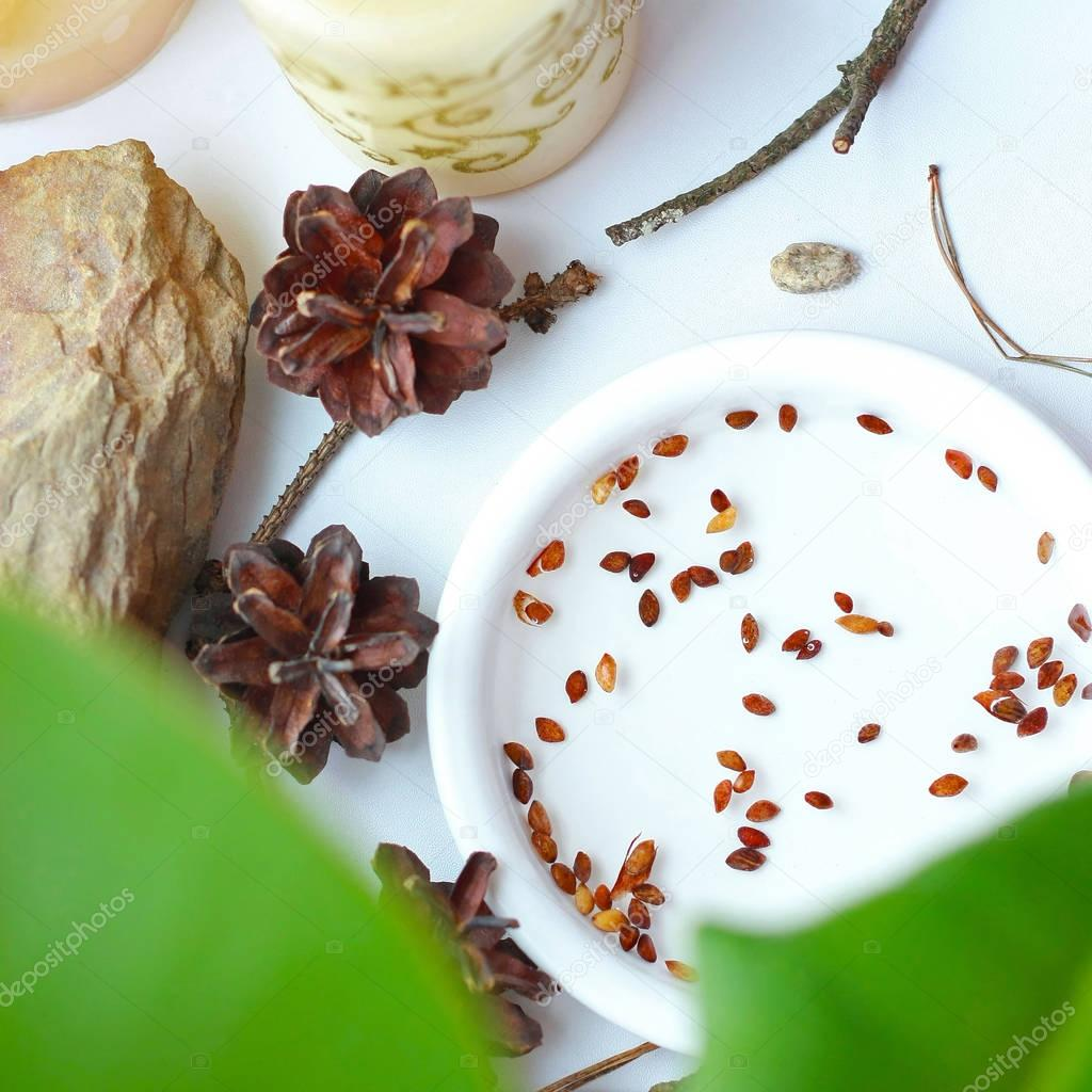 Bonsai seeds in a white plate