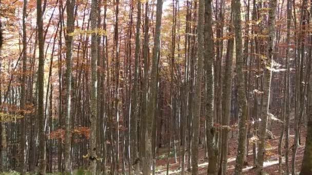Podzimní bučiny s padající listí