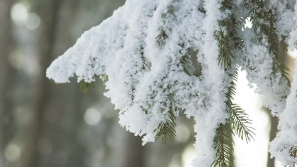 Havazik a téli szezonban, a faág hóval borítva