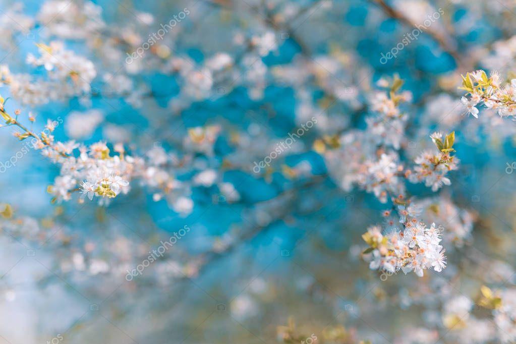 abstrait printemps rose fleur fleurs floues beau paysage de cerise amandiers en fleurs sur. Black Bedroom Furniture Sets. Home Design Ideas