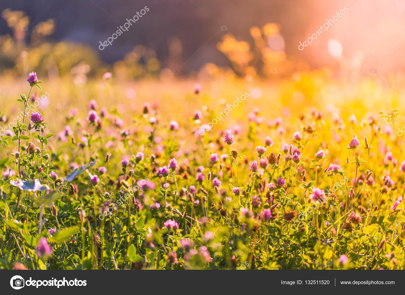 Beautiful summer meadow field flowers soft sunlight sun rays vintage beautiful summer meadow and field of flowers soft sunlight and sun rays with vintage tones photo by icemanphotos izmirmasajfo