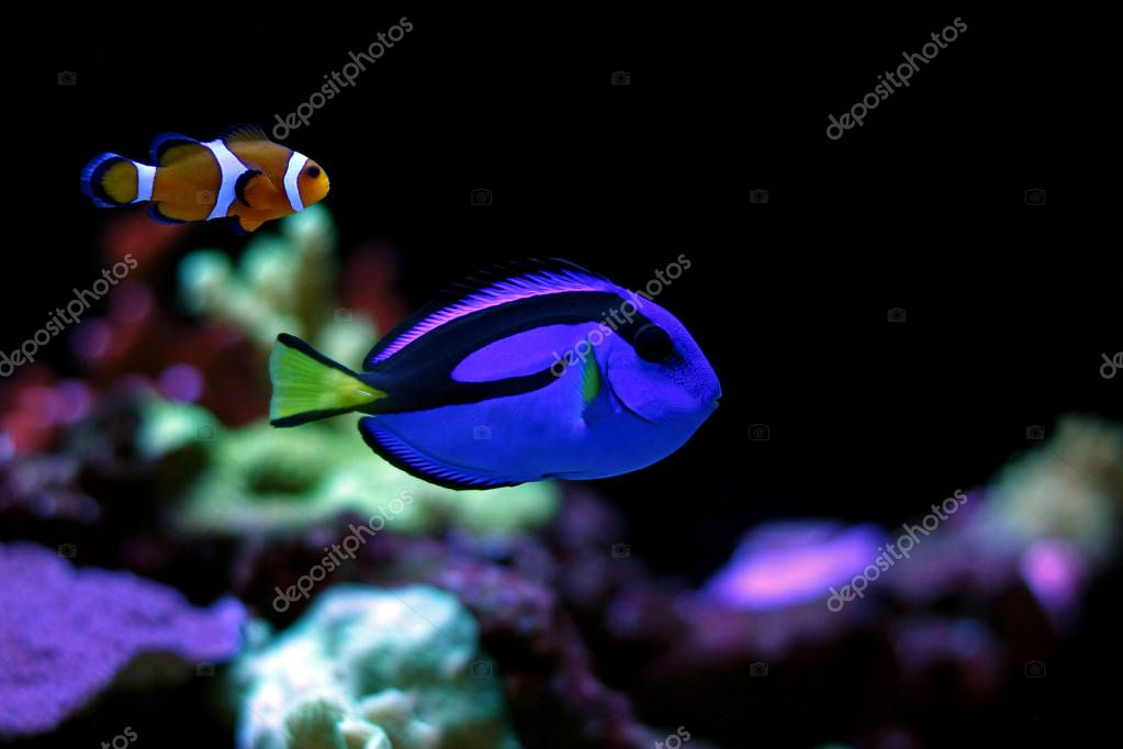 The Real Nemo and Dory