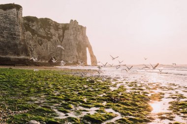 Seagulls fly above natural arch