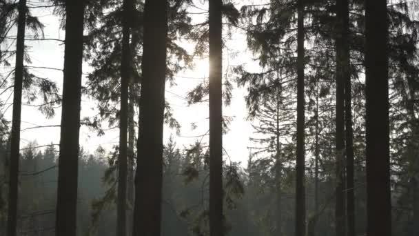 Schöner sonniger Tag im Wald am Nachmittag. Am Ende des Winters bleibt der Schnee in der Sonne schmelzen. Polen, Berge in 4k.Die Sonne bricht durch die Baumkrone