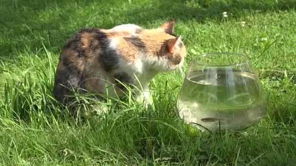 Mladé mokré kočička fotky