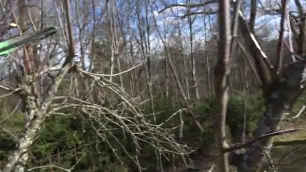 Ruce s nůžky prořezávání stromů na jaře. Kapesní Detailní záběr